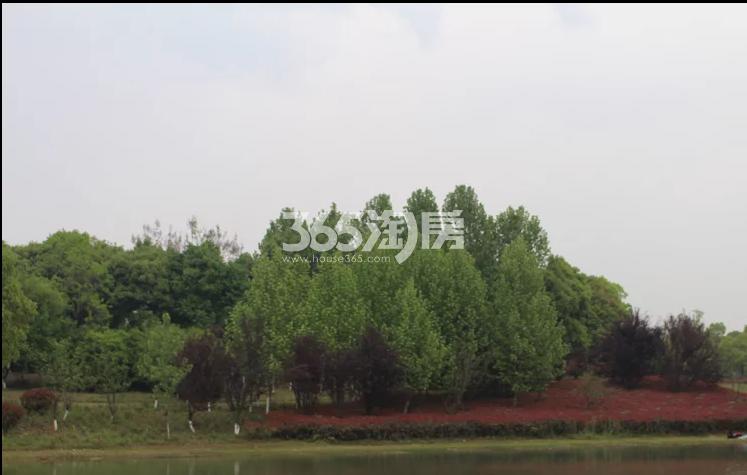 信达公园里周边配套公园实景图(9.4)