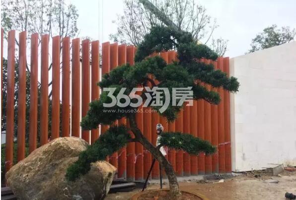 少荃府在建售楼部外树木实景(2017.9.7)